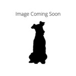 Heartland Pets Irish Water Spaniel